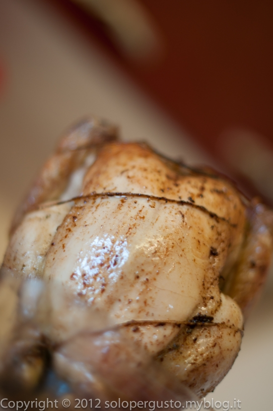 amarituda, solopergisto, pollo, pollo seduto